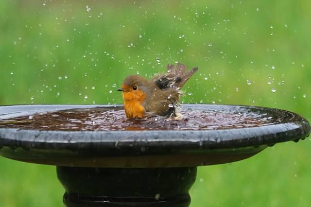 Z pítka budou opeřenci nejenom pít, ale taky se v něm koupat.