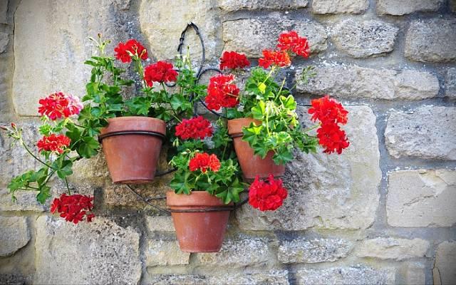 Zajímavá kompozice květináčů na venkovní zdi.