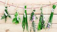 Nasušte si vlastní bylinky na zimu