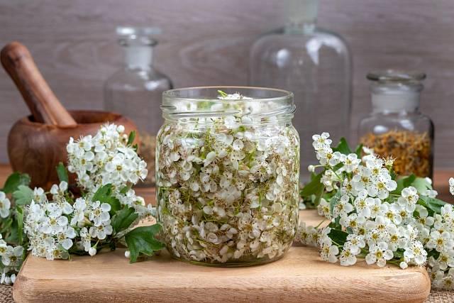 Hloh nejen nádherně voní, ale má silné léčivé účinky.