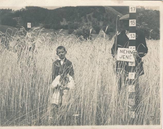 Nehnojeno - otec Elígius Kordík zkoušel roku 1932 jako první ve vesnici umělá hnojiva
