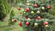 Vánoční stromek je symbolem vánoc téměř na celém světě