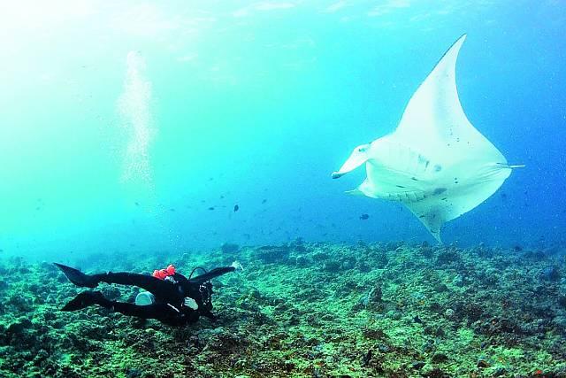 Natáčí kroužící mantu obrovskou na Maledivách.