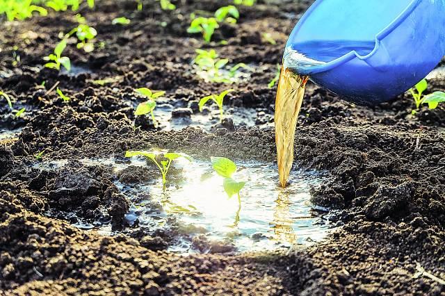 Výluh je pro rostliny elixír.