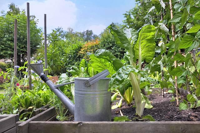 Voda je pro rostliny nezbytná, ale ocení i přírodní přihnojení.