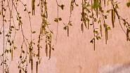 Které byliny sbírat v tomto období