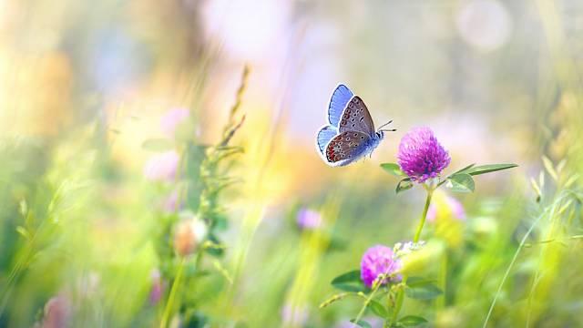 Pěkně udržovaný trávník dává pozemku kolem domu či vzahradě často větší hodnotu než pracně pěstované záhony květin.