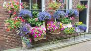 Takovéhle krásné zákoutí vám pelargonie vytvoří s dalšími květinami.