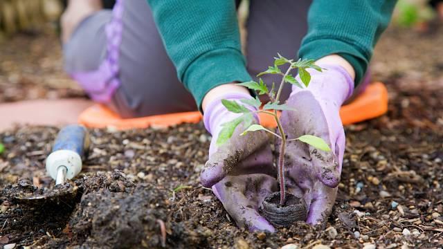 Při práci na zahradě budete potřebovat různé typy rukavic