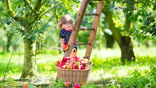 Dobrá úroda rovná se správné hnojení