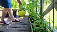 Starat se o rostliny je radost, ať už pěstujete kytky nebo rajčata.