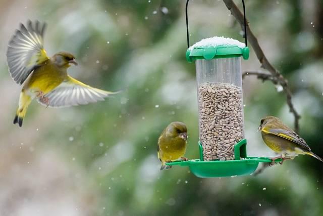 Má smysl ho doplňovat i na konci jara, někdy může ptákům zachránit život.