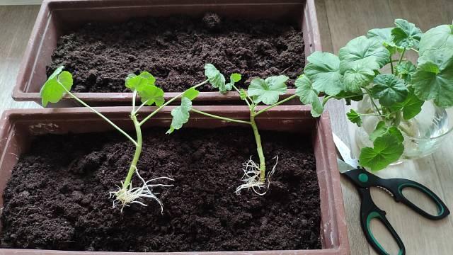 Rostliny včas přesaďte, ale chraňte před mrazem
