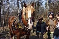 Děti se seznamují s prací v lese i s koněm.