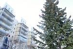 Vánoční strom v Mostě.