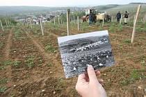 Obnova vinic v mostecké části Čepirohy. Fotografie prvního sázení vinice Libuše z doby před třiceti lety.