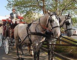 Herci projížděli kočárem centrum města.
