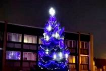Strom v Lomu.