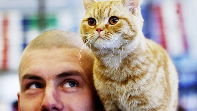 Výstava koček.