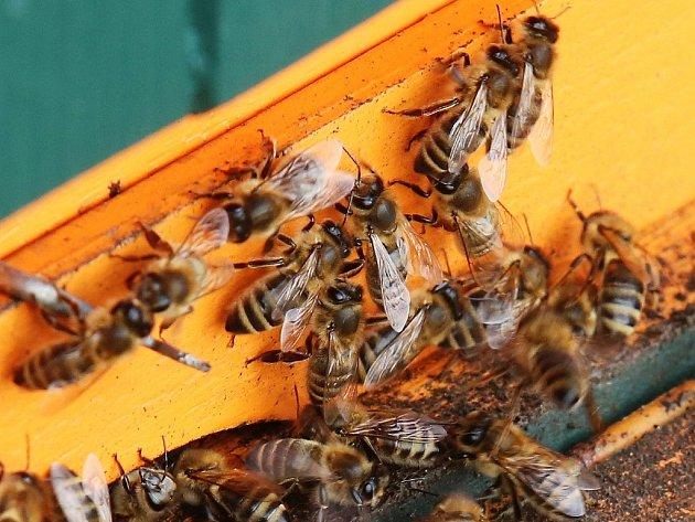 Včely.