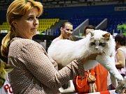 Na zimním stadionu v Mostě je Mezinárodní výstava koček.