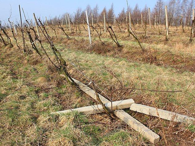 Poškozená vinice nad Čepirohy.
