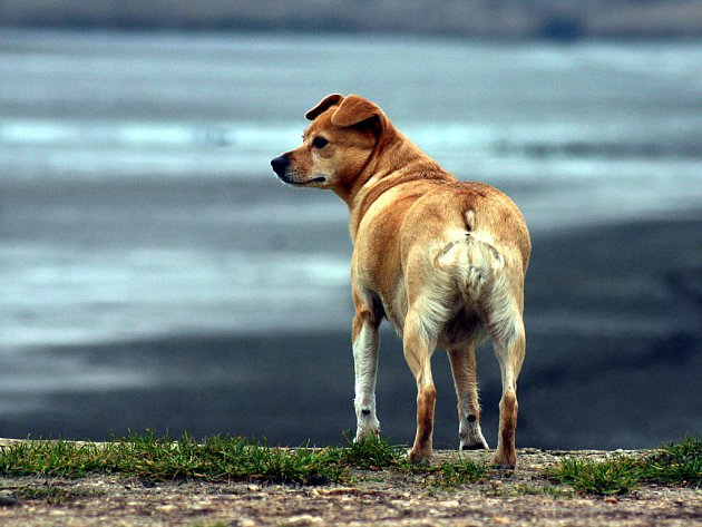 Smutný psí pohled.