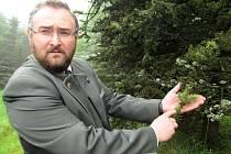 Lesní správce z Litvínova Pavel Rus u smrku napadeného kloubnatkou.