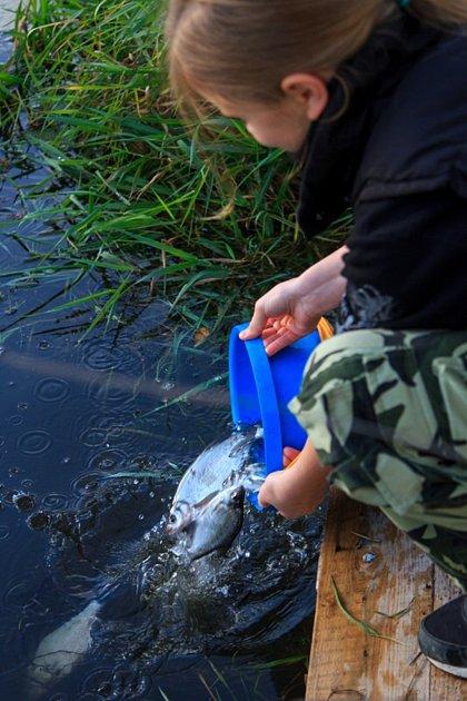 Vypouštění ryb do Bíliny.