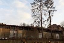 V litvínovské ulici Tylova sníh na zemi nahradily piliny z pokácených stromů.