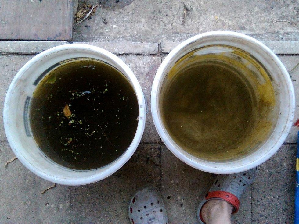 Vlevo je voda, kterou zahrádkář Miroslav Zapletal odebral v neděli z řeky Bíliny. Vpravo je starší voda z řeky, kam dal pár přidušených malých ryb.