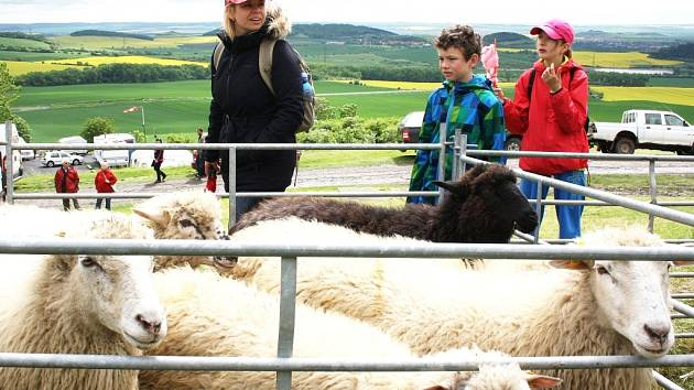 Ovce na Rané při loňské Slavnosti stepí.