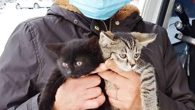 Zachráněná koťata v Mostě