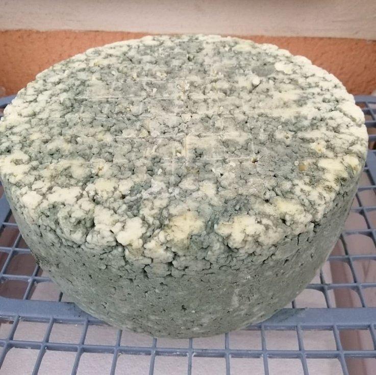 Sýr s ušlechtilou plísní