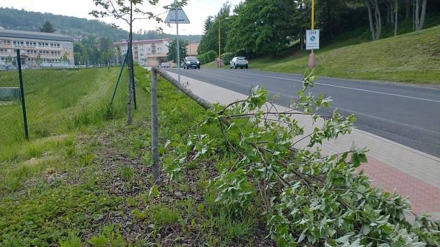Vandal v Meziboří polámal čerstvě zasazený stromek.