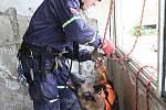 Záchranáři kynologické brigády IZS nacvičovali vyhledávání osob na chánovském sídlišti