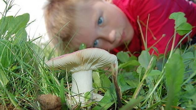 Šestiletý Vojta si prohlíží jednu z hub, která roste u mosteckého divadla.