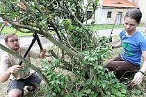 Členové ekologického Hnutí DUHA, které sídli v Brně, pomáhají s údržbou prostranství u hornojiřetínského kostela při týdenním pracovním pobytu doplněném besedami a kulturním programem. Do obce přijely čtyři desítky mladých idí. Spí na faře. Stravují se ve