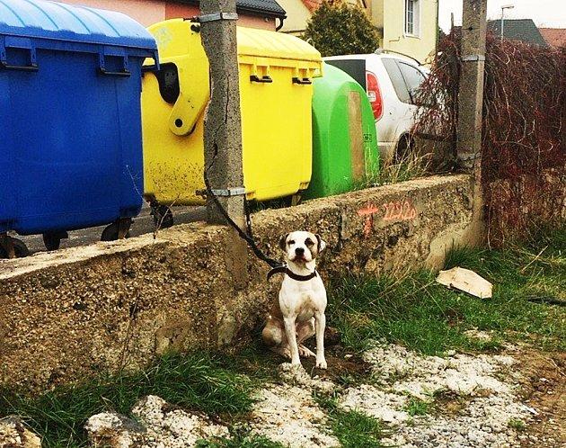 Zachráněný pes vMostě