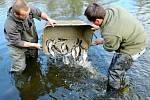 Jiří Jakeš a Michal Herzog, student Vyšší odborné školy vodního hospodářství a ekologie Vodňany, který má v Mostě praxi, vysazují ryby do řeky Bíliny.