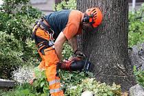 Stromy půjdou k zemi hned na několika místech v Litvínově.