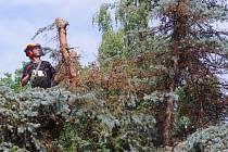 Práce v lese.
