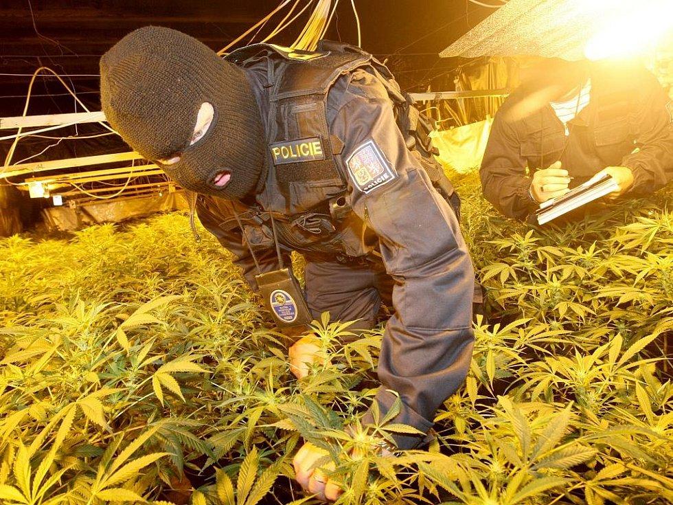 Policisté odhalili pěstírnu marihuany.