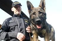 Policejní psovod Josef Janota cvičí teprve pětiměsíčního psa Normena v areálu policejní kynologie v Kaňkově na Mostecku. V těchto dnech tam je devět speciálně vycvičených psů a sedm psovodů.