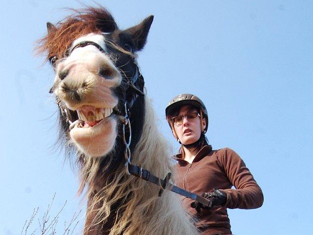Irský cob, známý jako cikánský kůň, soutěžil na akce pro veřejnost v Jezdeckém klubu Splněný sen v mosteckém Vtelně.
