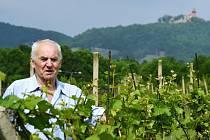 Ivan Váňa na vinici na úpatí mosteckého kopce Špičák, v pozadí Hněvín.