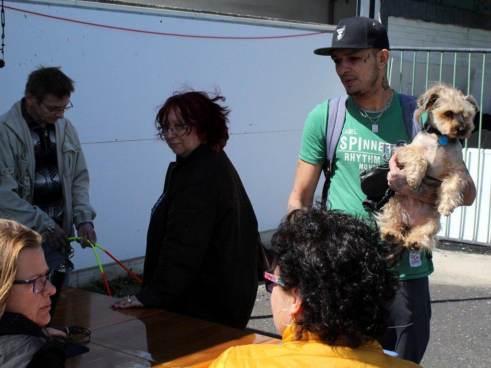 Očkování psů proti vzteklině v Mostě