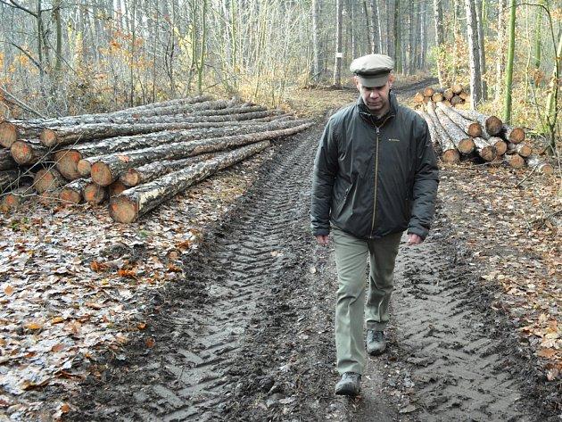 Na Resslu se těží dřevo. Lidé si mají dát u mýtin větší pozor. Na snímku revírník Daniel Konrád.