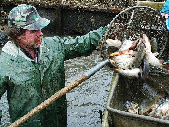 Rybář při výlovu nemilkovského rybníka.