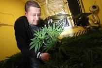 Kriminlisté kontrolují nalezené květináče rostlinek marihuany v jednom z bytů v Litvínově